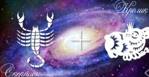 Скорпион-Кот (Кролик) — Scorpion Goroskop