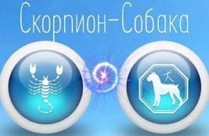 Скорпион-Собака — Scorpion Goroskop